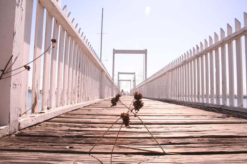 Download Weeds on Pier stock image. Image of piers, white, weed - 6022509