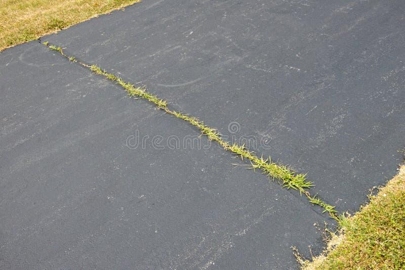 Weeds som växer i asfaltkörbanaspricka arkivbilder