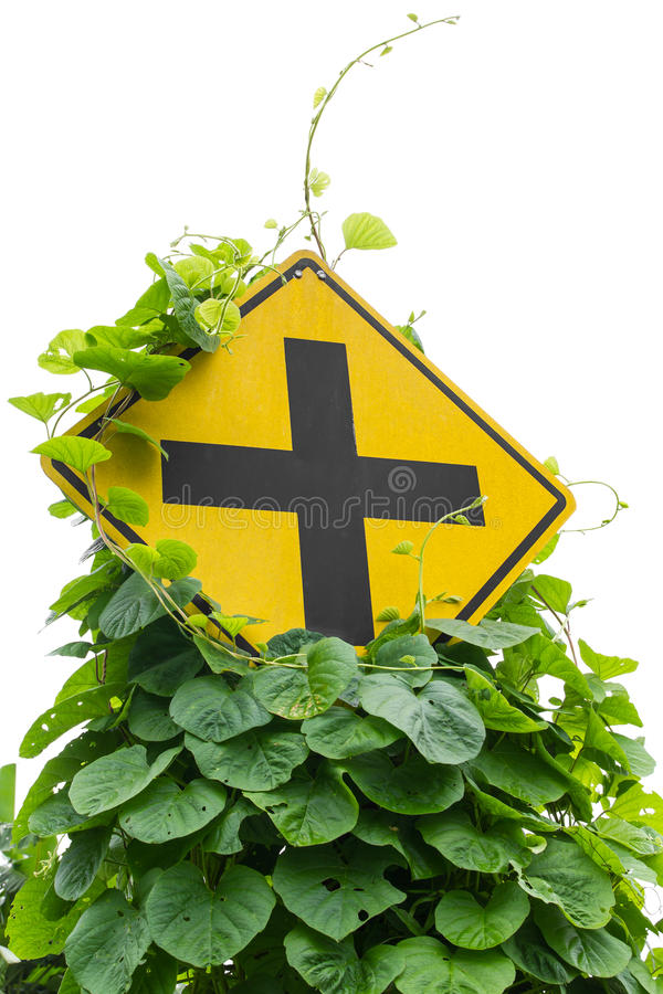 Weeds traffic signs. Vine leaves, weeds grew up and choked intersection traffic signs stock images