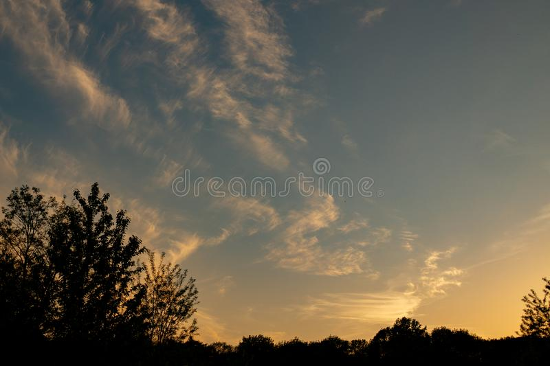 Weedy Plant Against the Sunset royalty free stock photos
