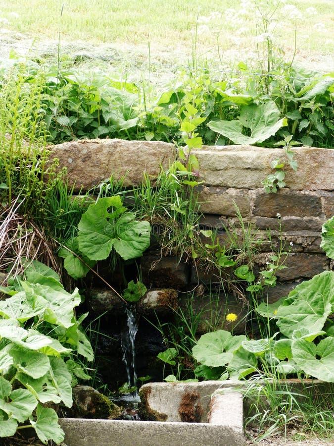 Weegbree met water die van goed gebied stromen royalty-vrije stock foto