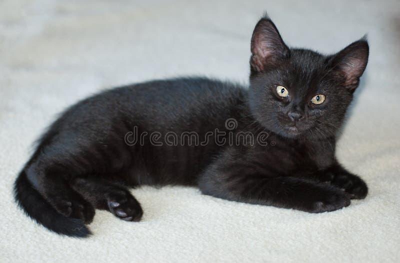 Download 10-week -old Black Kitten On Blanket Stock Image - Image of old, looks: 39510131