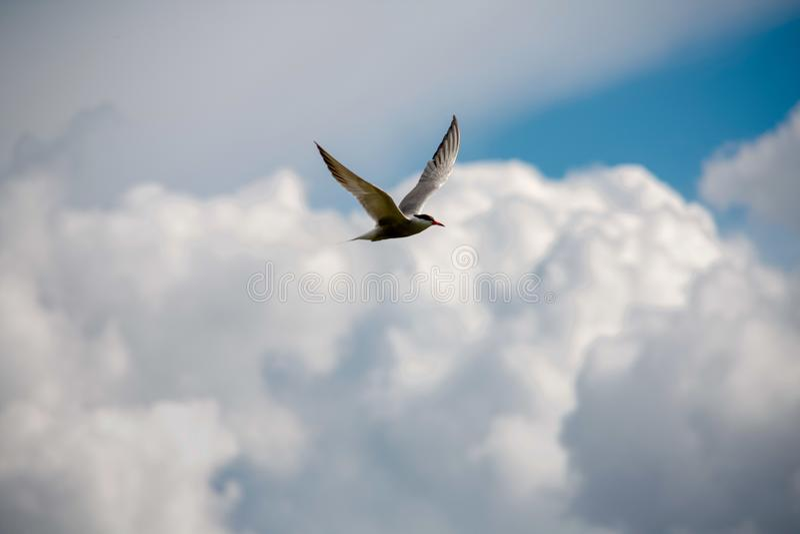 Beautiful sky full of clouds. Weekend in Russian countryside: Beautiful sky full of clouds stock images