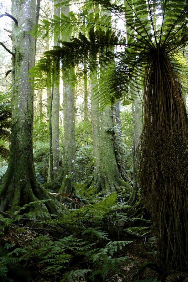 Weelderig bos stock afbeelding