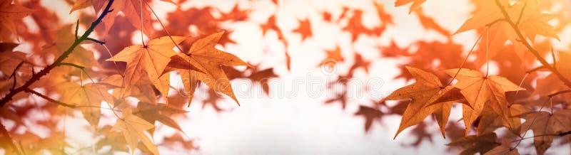 Weelderig gebladerte - de herfstbladeren op hoogste boom, mooie aard in de herfst stock foto