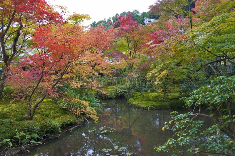Weelderig gebladerte van Japanse esdoornboom tijdens de herfst in een tuin in Kyoto, Japan stock foto's