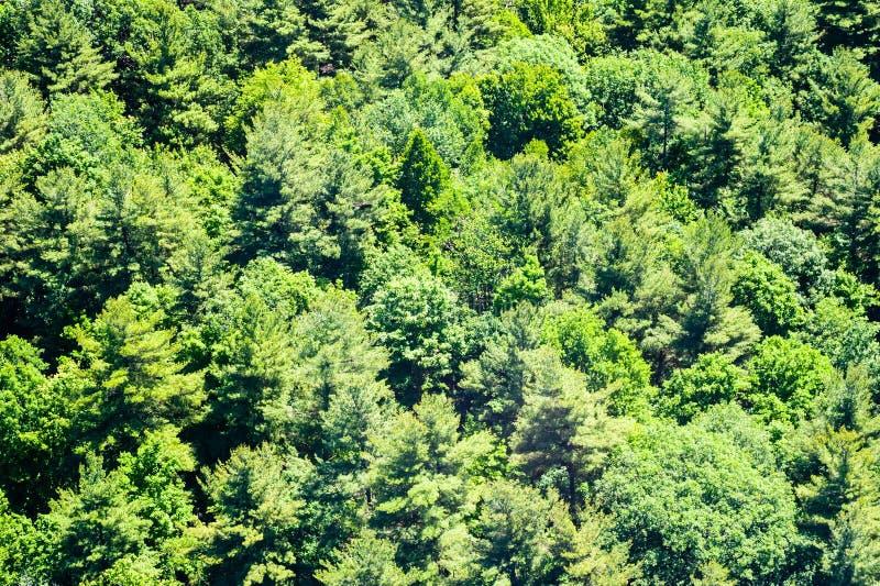 Weelderig groen bos van verschillende bomen royalty-vrije stock foto's