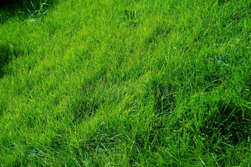 Weelderig groen gras, helder zacht gazon, natuurlijke achtergrond, natuurlijke achtergrond royalty-vrije stock fotografie