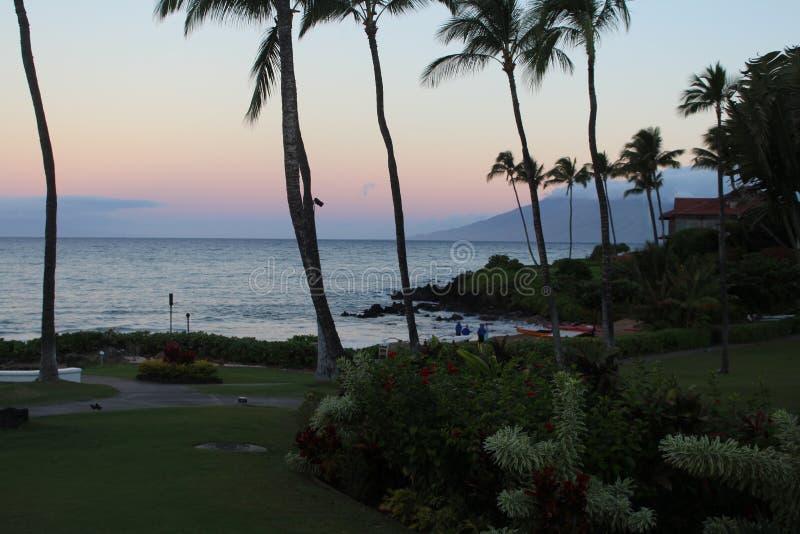 Weelderig groen in Hawaï stock afbeeldingen