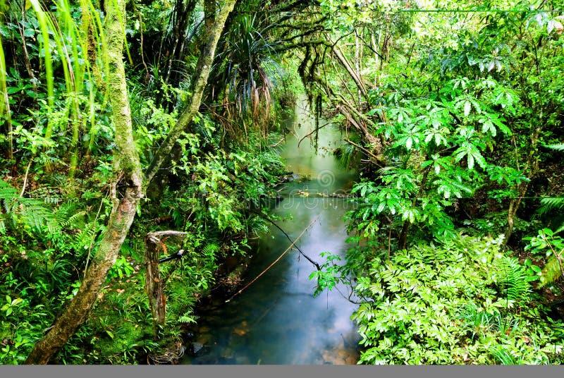 Weelderig, groen regenwoud stock foto's