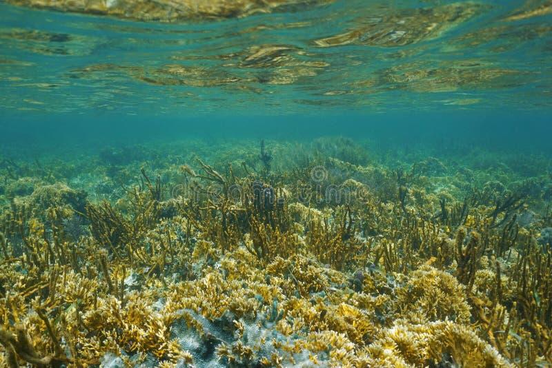 Weelderig koraalrif onder water op ondiepe zeebedding stock foto's