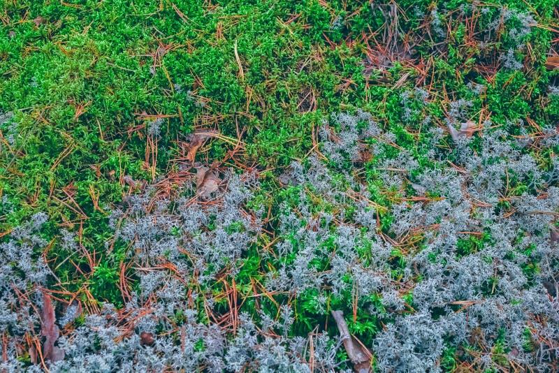 Weelderig mos in een bos stock afbeelding