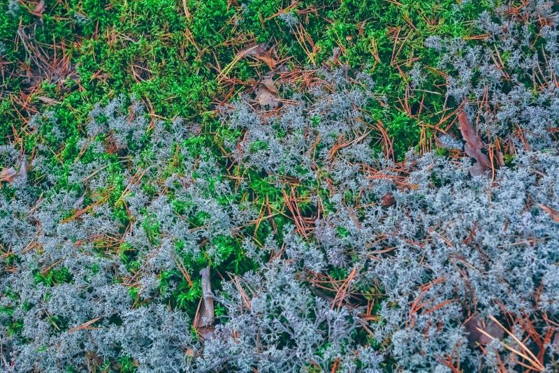 Weelderig mos in een bos royalty-vrije stock afbeelding