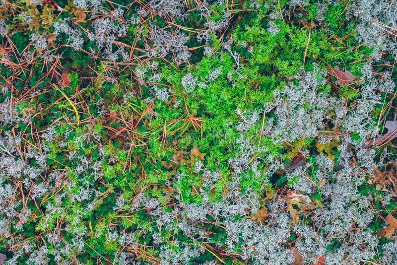 Weelderig mos in een bos royalty-vrije stock afbeeldingen