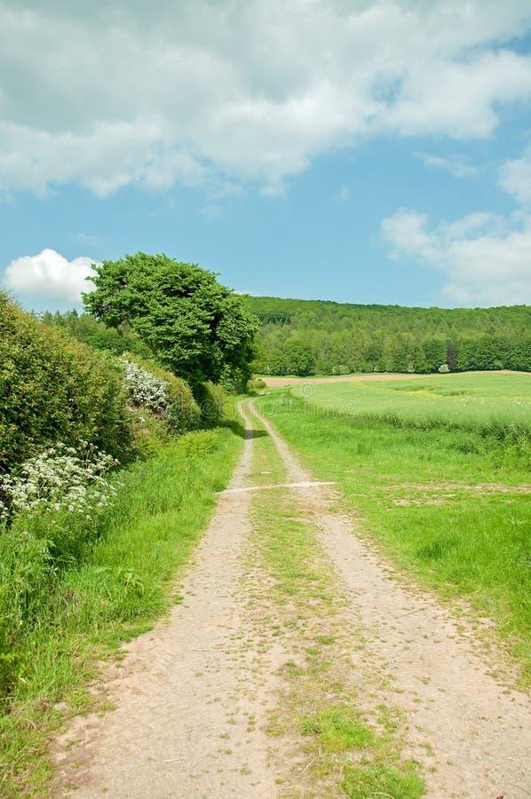 Weelderig zomerlandschap in het Engelse platteland stock foto