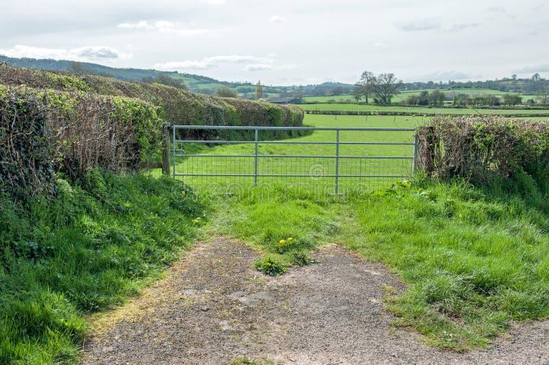 Weelderig zomerlandschap in het Engelse platteland stock foto's