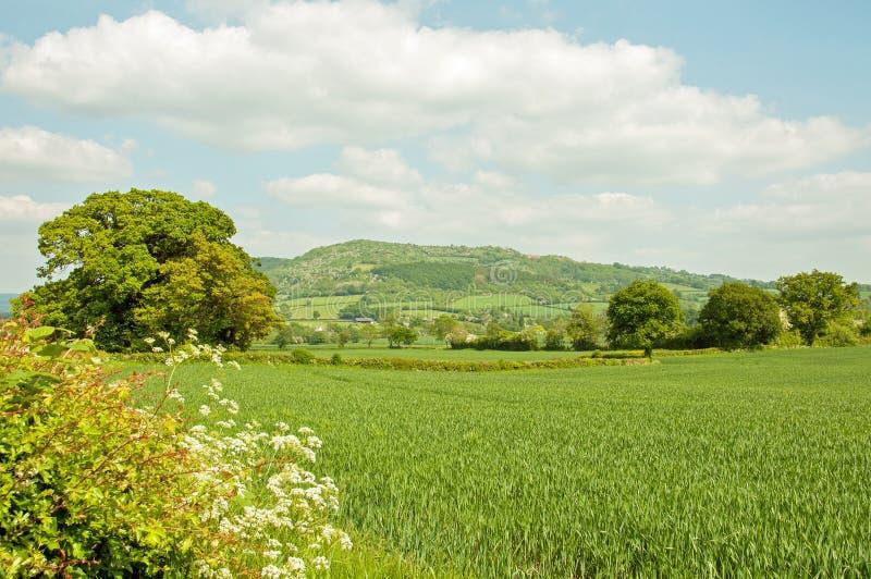 Weelderig zomerlandschap in het Engelse platteland royalty-vrije stock foto's