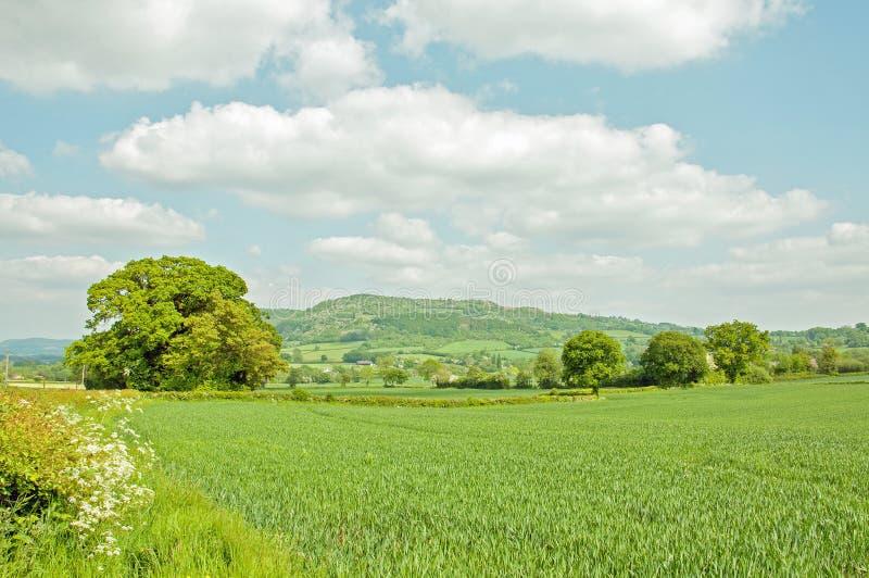 Weelderig zomerlandschap in het Engelse platteland royalty-vrije stock afbeelding