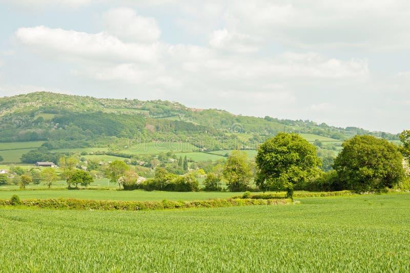 Weelderig zomerlandschap in het Engelse platteland stock afbeelding