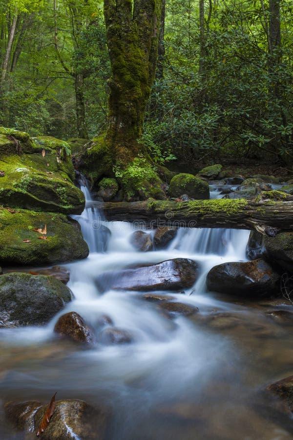 Weelderige cascade in bos royalty-vrije stock foto