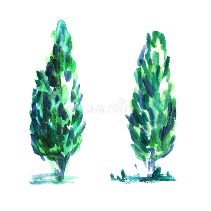 Weelderige Cipres twee of kleine thujaboom met het uitspreiden van takken vector illustratie