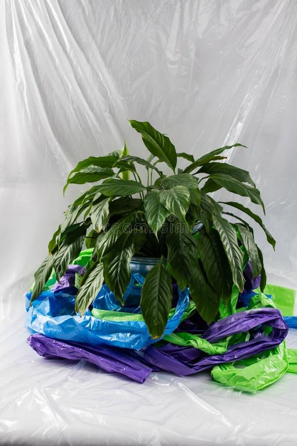 Weelderige en groene huisinstallatie die zich in een pot in het midden van plastiek bevinden stock fotografie