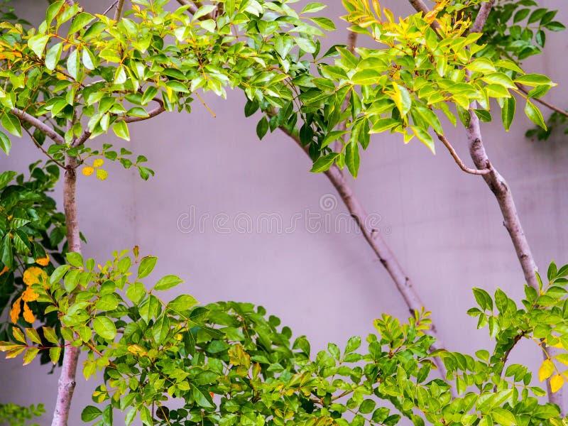 Weelderige groene bladeren vooraan op een cementmuur royalty-vrije stock foto