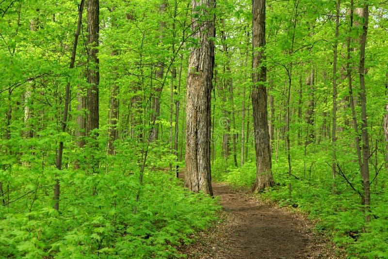 Weelderige groene bomen royalty-vrije stock foto's