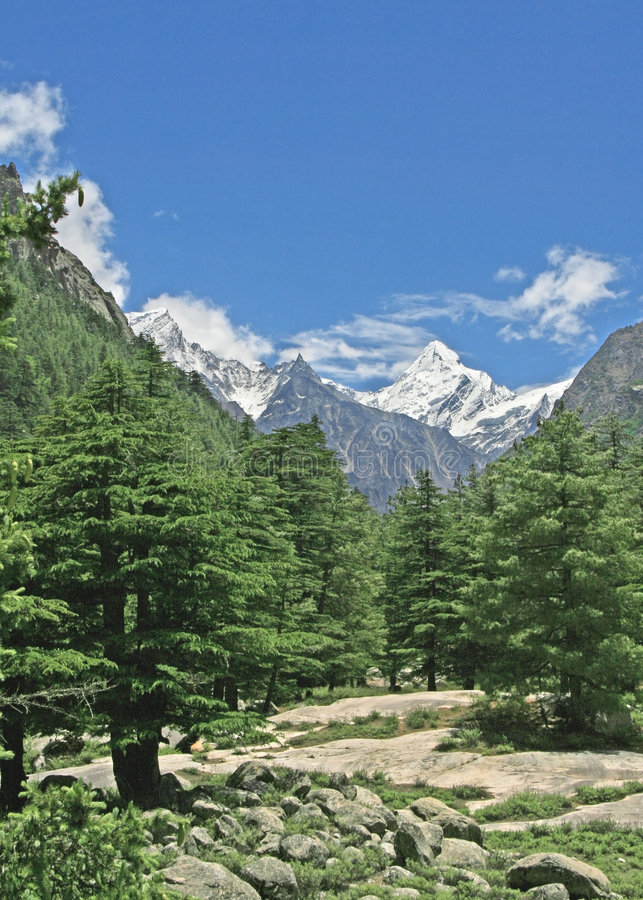 Weelderige groene himalayan bos en vallei uttaranchal India royalty-vrije stock foto's