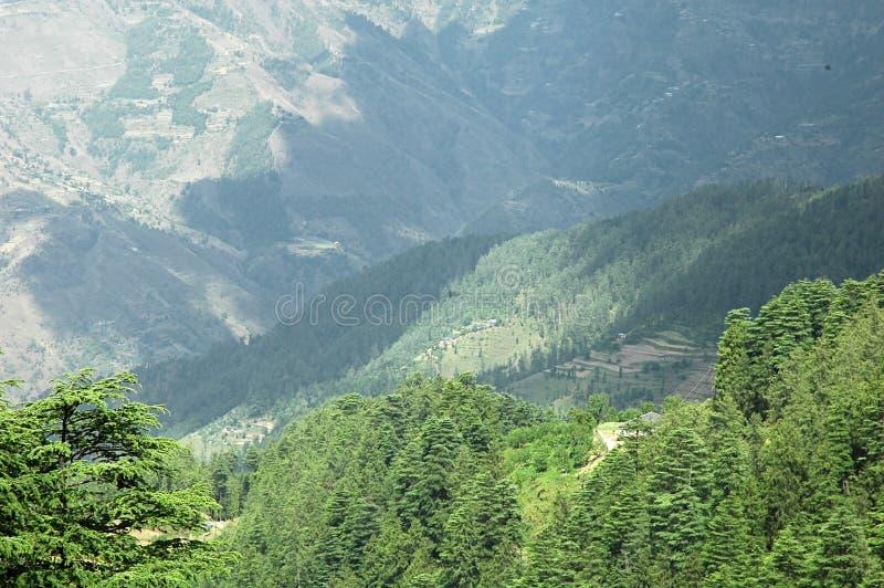 Weelderige groene himalayan bos en valleisimla India stock foto's