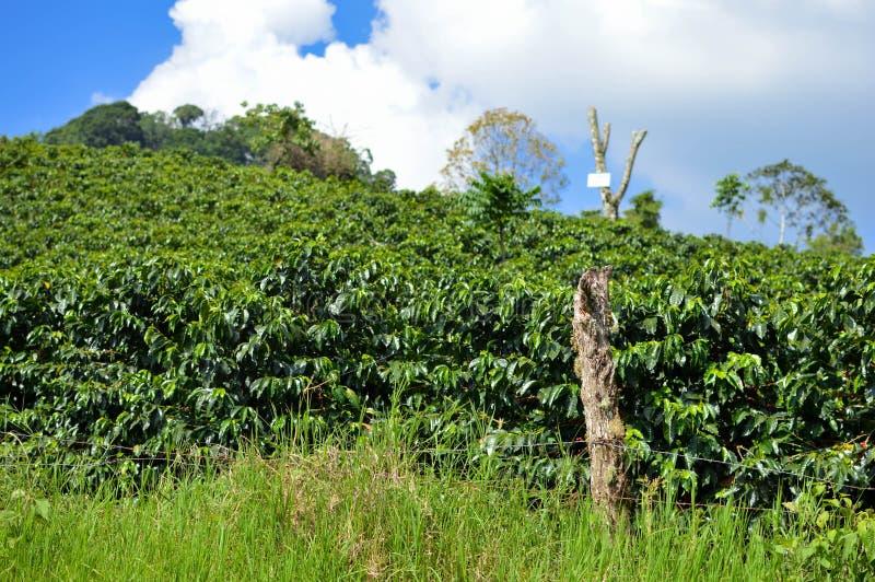 Weelderige groene koffiebomen van de aanplantingen in de hooglanden van Honduras Kaarten van de beeldspraak van NASA stock afbeelding