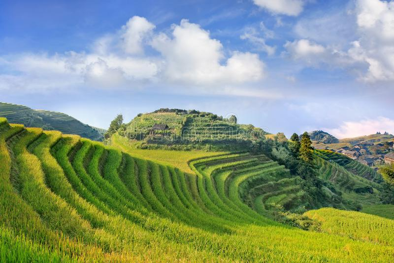 Weelderige groene rijstterrassen tegen een blauwe hemel met dramatische wolken, Longji, China stock afbeelding