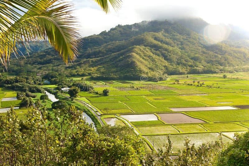 Weelderige Hanalei-Vallei op Hawaiiaans Eiland Kauai royalty-vrije stock fotografie