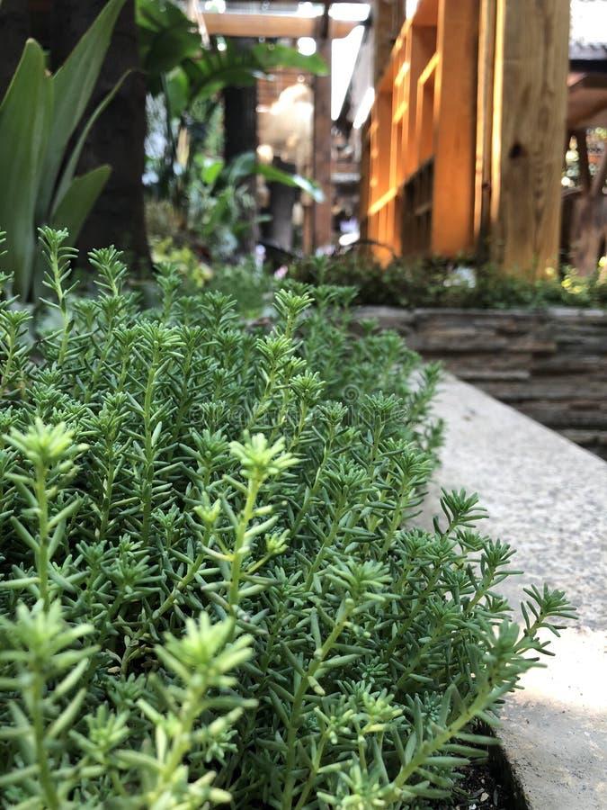 Weelderige installaties en grassen in het bloembed royalty-vrije stock foto