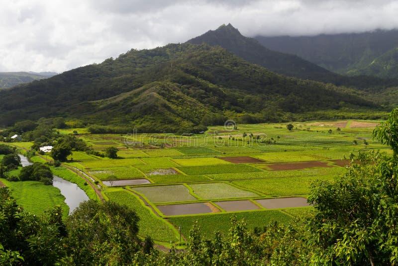 De weelderige Gebieden van de Taro in Hanalei royalty-vrije stock foto