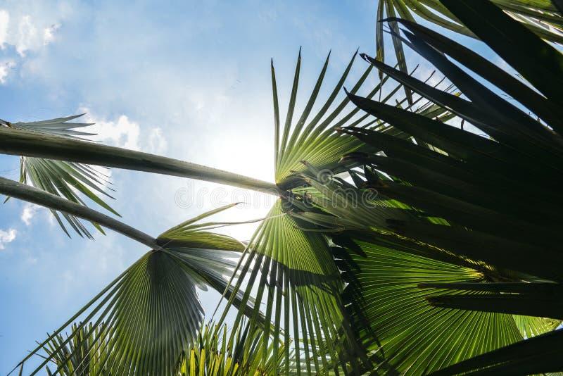Weelderige tropische palm die op perspectief kijken stock fotografie