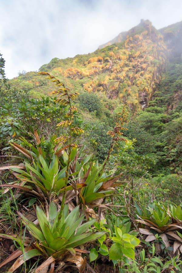 Weelderige vegetatie van bromelia's en struiken die de grond van de vulkaan van La Soufriere, Guadeloupe behandelen stock afbeelding
