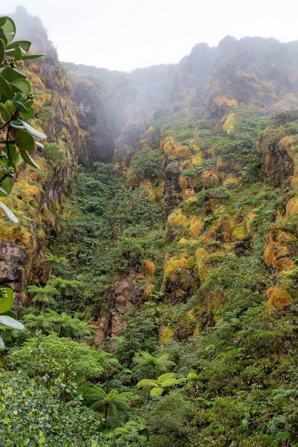 Weelderige vegetatie van bromelia's en struiken die de grond van de vulkaan van La Soufriere, Guadeloupe behandelen stock foto's