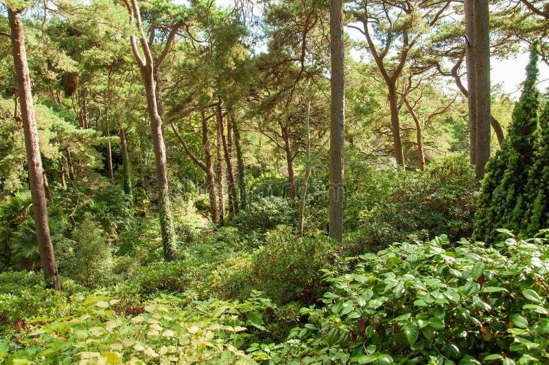 Weelderige zomer bosbomen in het Engelse platteland royalty-vrije stock afbeeldingen