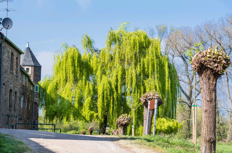 Weeping Willow. Large willow outside a medieval walled town in Germany stock photos