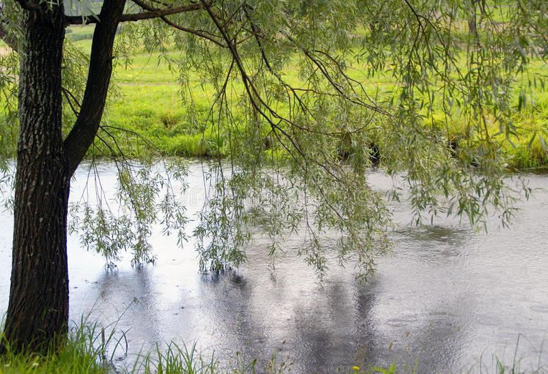 Download Weeping willow over river stock image. Image of weather - 31236151