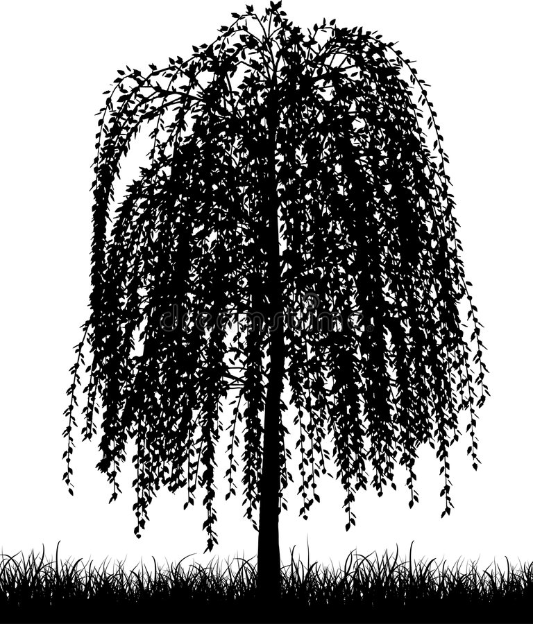 Free Weeping Willow Tree Royalty Free Stock Photos - 5653158