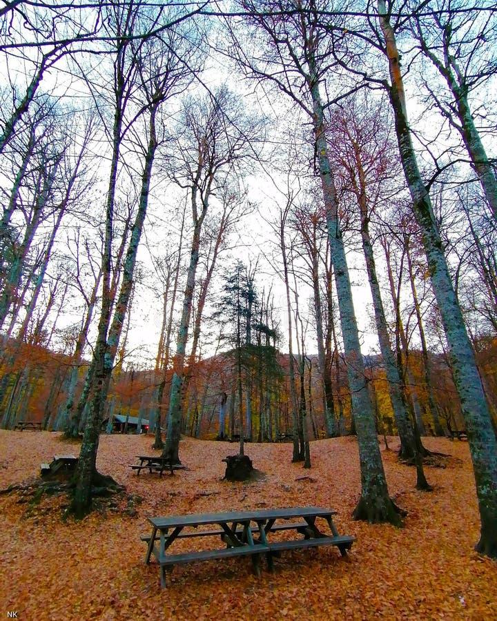 Weergave camping-gebied royalty-vrije stock afbeeldingen