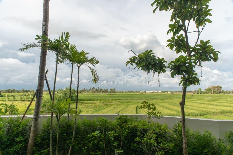 Weergave van het rijstveld op het eiland Bali in Indonesië royalty-vrije stock afbeelding