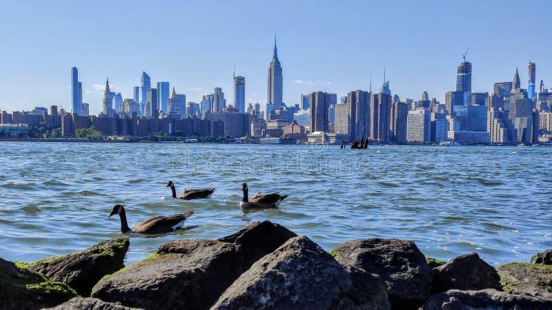 Weergeven aan de stadsgebouwen van New York stock afbeeldingen