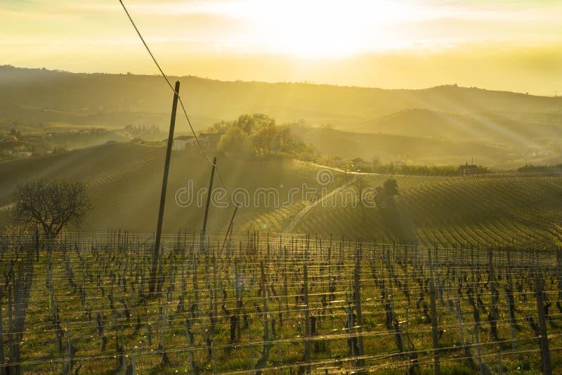 Weergeven bij zonsondergang over de wijngaarden in de heuvels van Langhe in Piemonte Italië royalty-vrije stock foto
