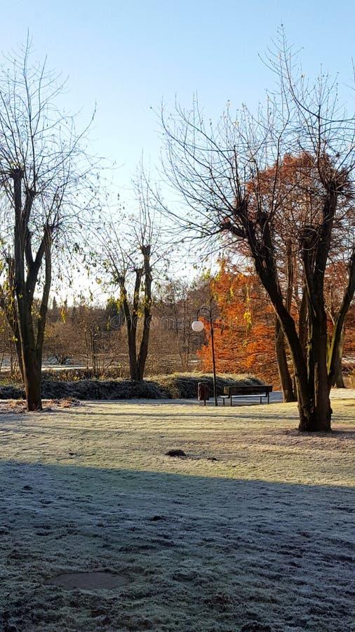 Weergeven op een ijzig landschap op een koude de winterdag in het district emsland Duitsland stock fotografie