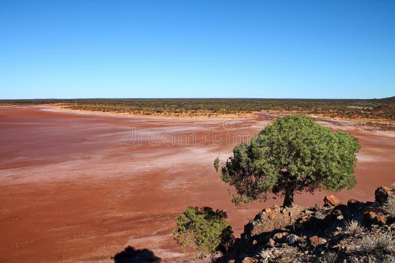 Weergeven over modderig zout meer van heuvel met boom royalty-vrije stock afbeelding