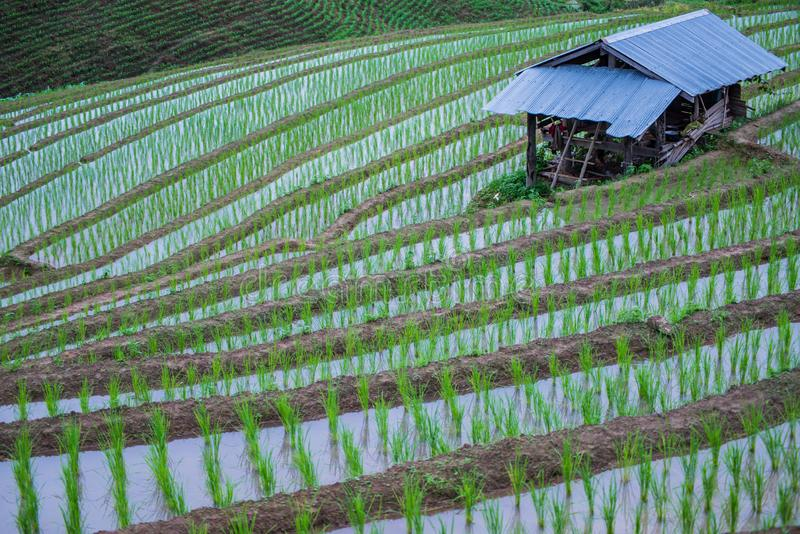Weergeven Terrasvormig Paddy Field in mae-Jam Dorp, Chaingmai, stock foto's