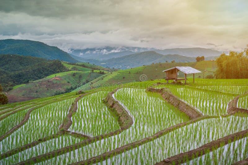 Weergeven Terrasvormig Paddy Field in mae-Jam Dorp, Chaingmai, stock afbeeldingen